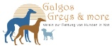 Galgos Greys and more